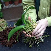 Omplanteringsmaterial för orkidéer