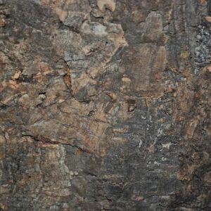 Platta av bark av korkek