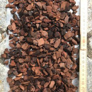 Orchiata-bark, medelstorlek utspridd på marken för att visa storlek
