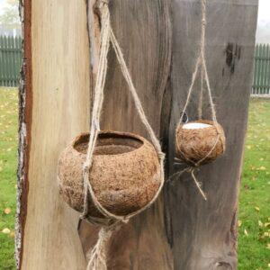 Amplar av kokosfiber