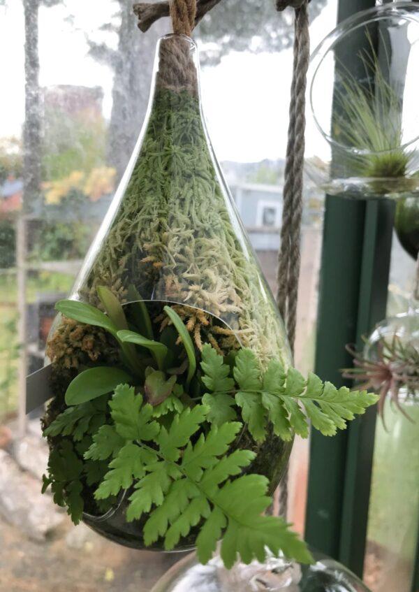 Svavande glasdroppe med orkidé, ormbunke och vitmossa